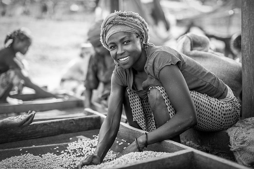 Miten selvitä ilmastomuutoksesta? Reilun kaupan osuuskunnat tukevat pienviljelijöitä