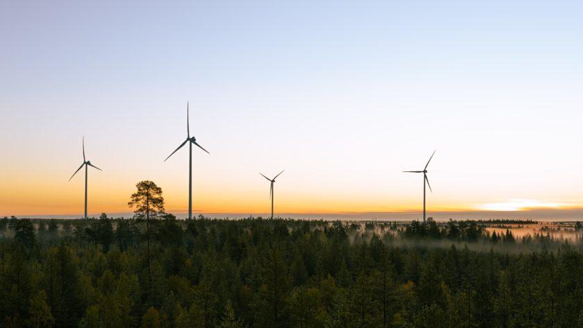 Kuvassa aruingonlasku metsäisellä aukiolla. Horisontissa näkyy neljä tuulivoimalaa.